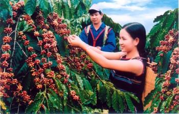 170 tỷ đồng xây dựng cà phê Việt chất lượng cao