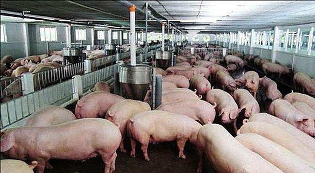 Luật Chăn nuôi: Tạo hành lang pháp lý cho ngành chăn nuôi phát triển bền  vững