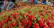 Nông lâm thủy sản sang Trung Quốc: Xuất nhiều, rủi ro cao