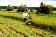 Nông nghiệp 2016: Vượt thách thức, duy trì tăng trưởng