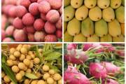 Xuất khẩu rau quả chạm mốc hơn 3,5 tỷ USD