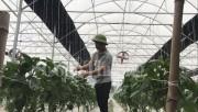 Thu tiền tỷ mỗi năm nhờ nông nghiệp công nghệ cao