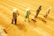 Nâng cao chuỗi giá trị lúa gạo: Cần thay đổi mang tính bước ngoặt