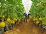 Đầu tư công nghệ cao, chấm dứt tình trạng sản xuất nhỏ lẻ trong nông nghiệp