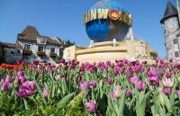 me mai giua doi tulip ngat ngao huong sac tai ba na
