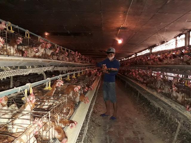 Trang trại nuôi gà đẻ của gia đình chị Đỗ Thị Thứ - Đông Anh (Hà Nội)