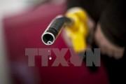 Giá dầu mỏ nhích nhẹ sau báo cáo của Bộ Năng lượng Mỹ