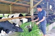 Ngành chăn nuôi: Tổ chức lại sản xuất để phát triển