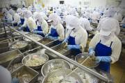 Tôm Việt Nam xuất khẩu sang Mỹ tăng mạnh