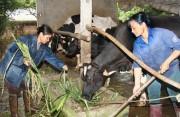 Ngành nông nghiệp làm gì để hội nhập?