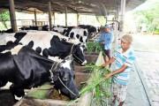 FTA và TPP với nông sản Việt - Động lực để thay đổi