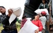 Hỗ trợ khẩn cấp 2.000 tấn gạo cho tỉnh Bình Định