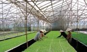 Doanh nghiệp Nhật Bản đầu tư vào Việt Nam: Xu hướng mới