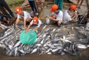 Hoa Kỳ dừng nhập khẩu cá tra hun khói từ Việt Nam