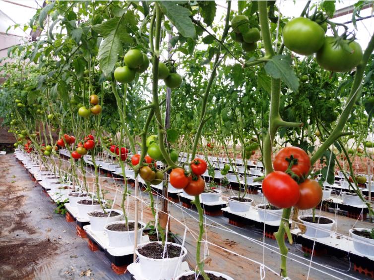 TP. Hồ Chí Minh thúc đẩy nông nghiệp công nghệ cao phát triển