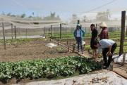 Nông sản Long An 'tìm đường' về TP. Hồ Chí Minh
