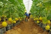 Nông nghiệp TP. Hồ Chí Minh tăng trưởng cao
