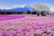 Trải nghiệm độc đáo ở xứ sở Mặt trời mọc trong Sắc màu Nhật Bản 2018