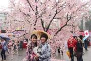Sắp diễn ra lễ hội giao lưu văn hóa Nhật Bản