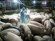 Cơ bản đã khống chế được việc sử dụng chất cấm trong chăn nuôi