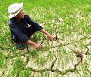 Chuyển đổi mô hình phát triển bền vững ĐBSCL thích ứng với biến đổi khí hậu