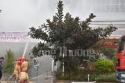 Aeon Mall Long Biên diễn tập phòng cháy chữa cháy