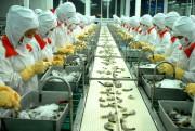 Australia cấm nhập khẩu tôm và thịt tôm chưa nấu chín