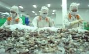 Kim ngạch xuất khẩu tôm tăng 22%