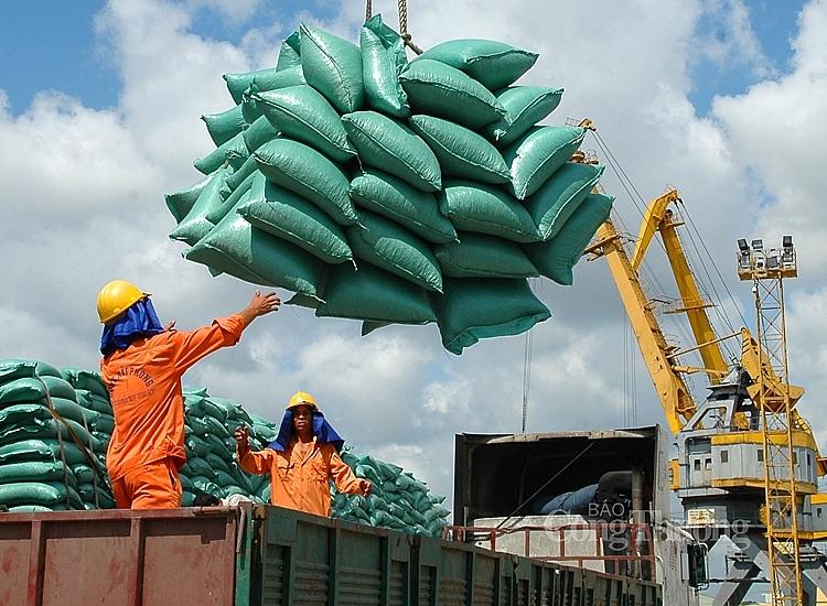 Xuất khẩu gạo được kỳ vọng tăng trưởng vào cuối năm