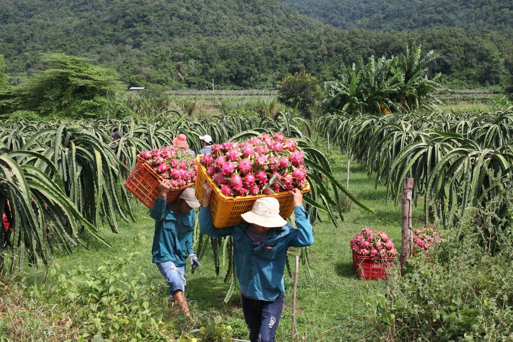 Bộ Công Thương mở thêm kênh tiêu thụ cho nông sản, thực phẩm Việt