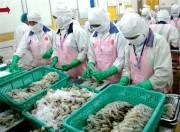 Australia ra thông báo mới về quản lý tôm và các sản phẩm tôm nhập khẩu