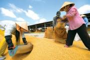 Xây dựng hệ thống dữ liệu thông tin về thị trường lúa gạo