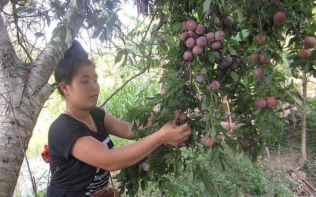 man yen chau chinh phuc thi truong bang chat luong