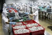 Xuất khẩu mực và bạch tuộc duy trì tăng trưởng