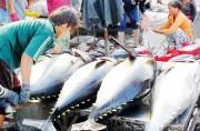 EU cảnh báo thẻ vàng IUU với Việt Nam: Thách thức và cơ hội