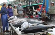 Xuất khẩu cá ngừ tăng trưởng mạnh ở nhiều thị trường