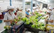 Xuất siêu rau quả gần 1,6 tỷ USD sau 10 tháng