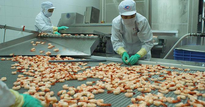 Việt Nam hiện là nguồn cung tôm lớn nhất cho Australia