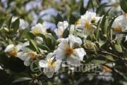 Quảng Ninh tưng bừng khai mạc lễ hội hoa Sở Bình Liêu 2017