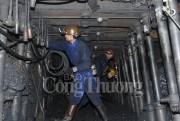Công ty than Hòn Gai triển khai nhiệm vụ năm 2018