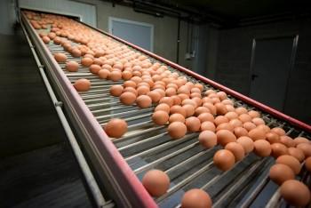 Khủng hoảng trứng bẩn lan rộng các nước châu Âu