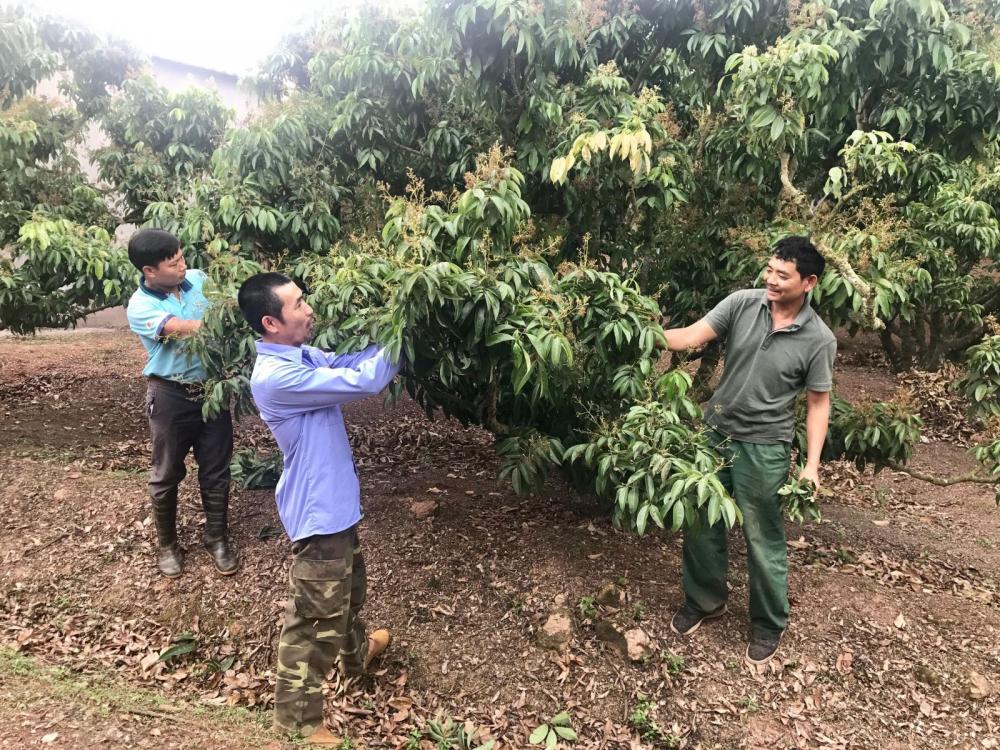 Cơ hội tốt gia tăng xuất khẩu sản phẩm nông nghiệp Bắc Giang