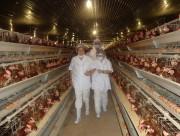 Ngành chăn nuôi trước thềm TPP: Hãy chú trọng liên kết chuỗi
