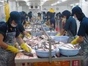 Tạm hoãn thời điểm thực hiện 2 quy định mới về xuất khẩu cá tra
