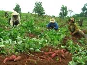 """Chậm """"rửa oan"""" cho nông sản Việt"""