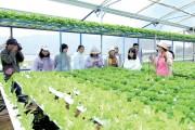 Đẩy mạnh chuỗi cung ứng nông sản an toàn