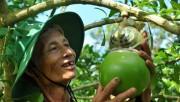 Thắng lớn từ trái cây độc, lạ dịp Tết