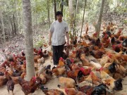 Giá gà ta tăng mạnh
