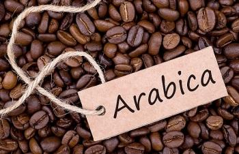 gia ca phe arabica se phuc hoi trong nam 2020