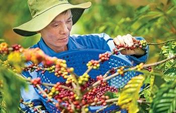 ca phe organic ket tu tinh hoa